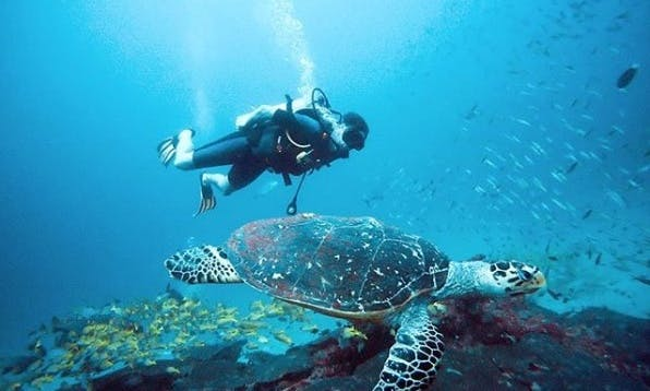 Daily Boat Diving Trips in Thulusdhoo, Maldives