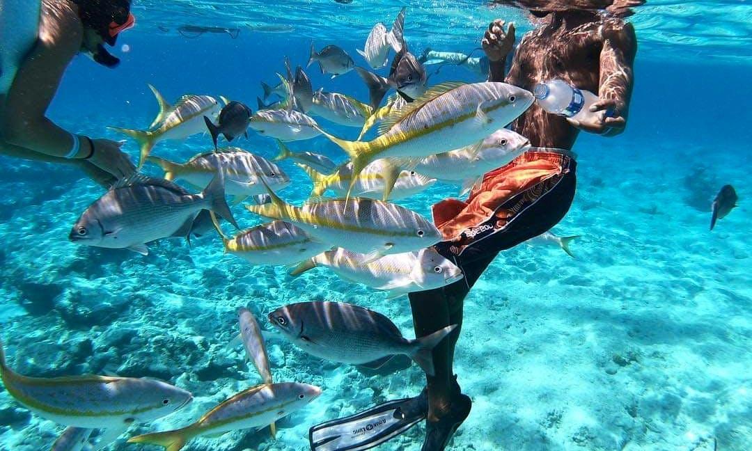 Blue Water Island Adventures Nassau Bahamas