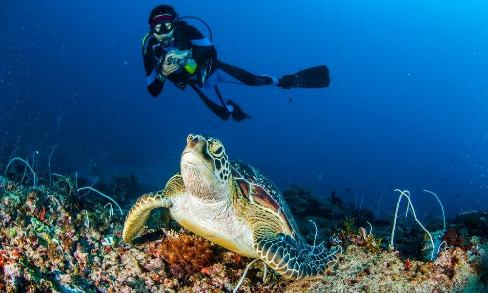 Book The Scuba Diving Adveuture With Us in Aydın, Turkey