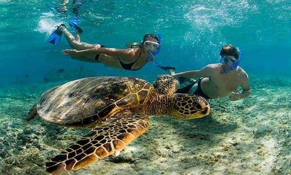 Snorkeling Adventure in Muscat,