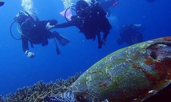 Discover Scuba Diving in Nusa Penida