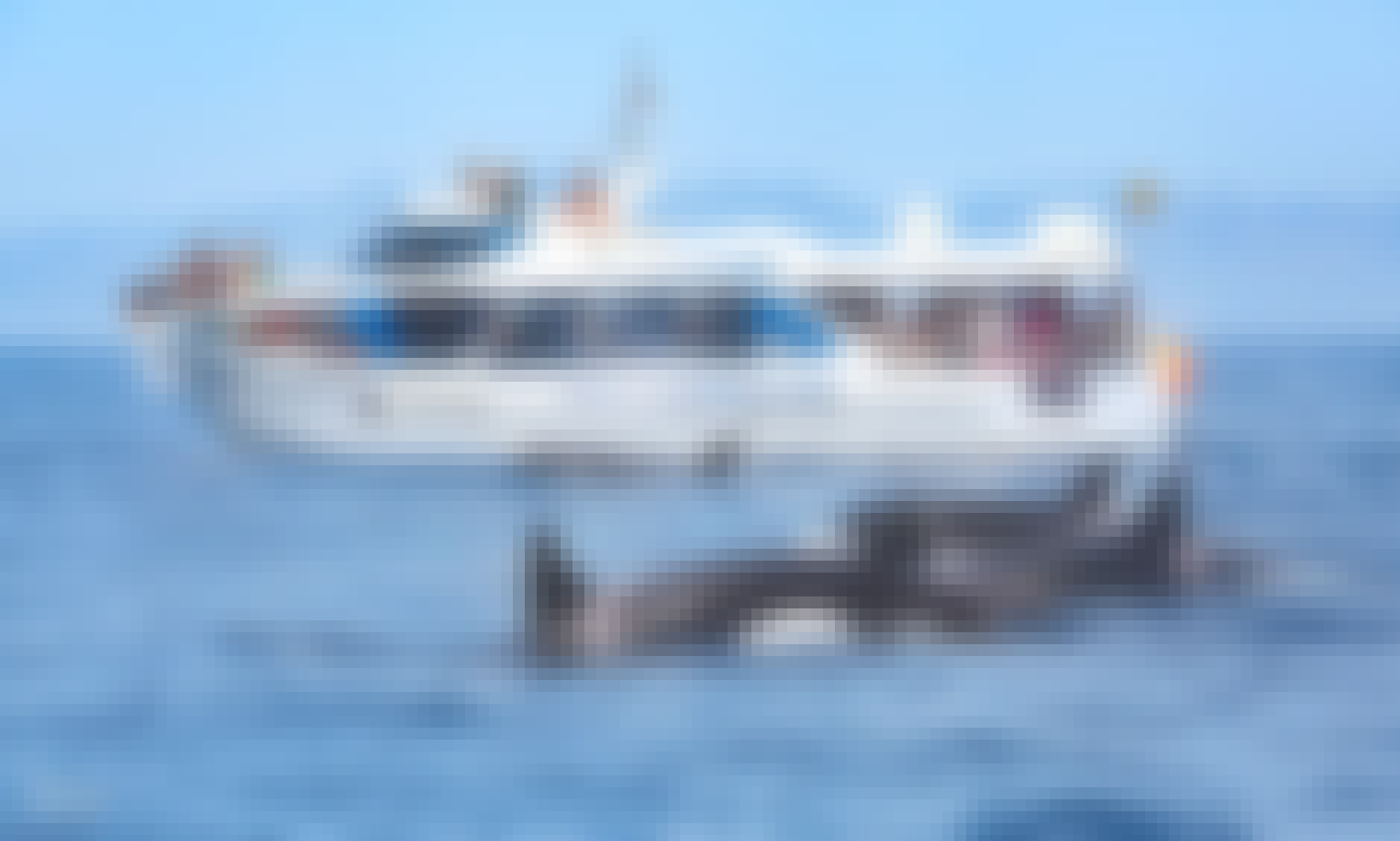 Book The Whale And Dolphin Watching Trip On Pirate Salvora In Tarifa, Spain