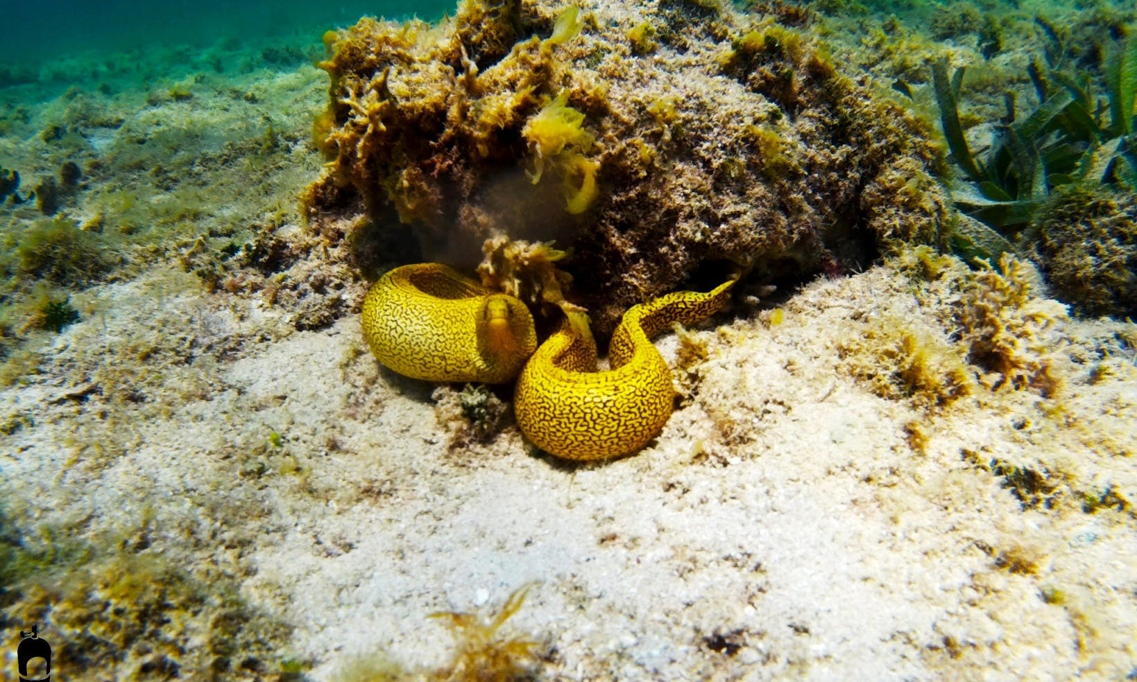 Diving in Artemisa, in Cuba with a Happy and Professional Diving Team