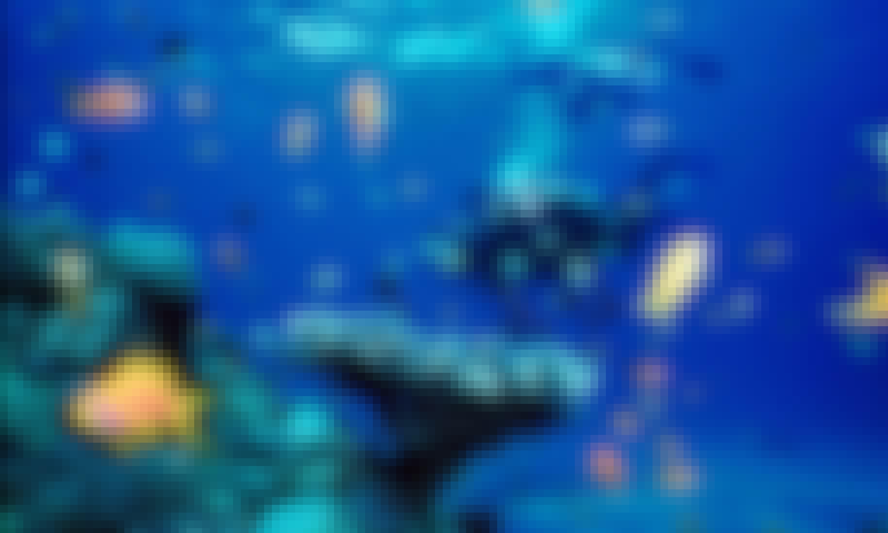Scuba Diving Trip in Maafushi, Maldives
