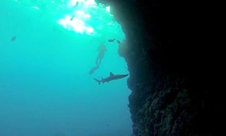 Scuba Diving Vacation in Galapagos Islands