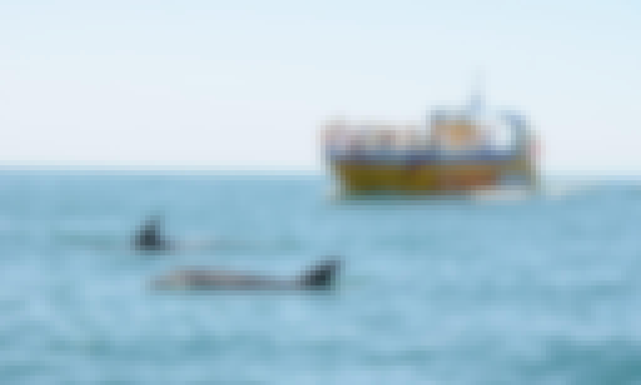 2 hours Dolphin Watch in Muscat, Oman