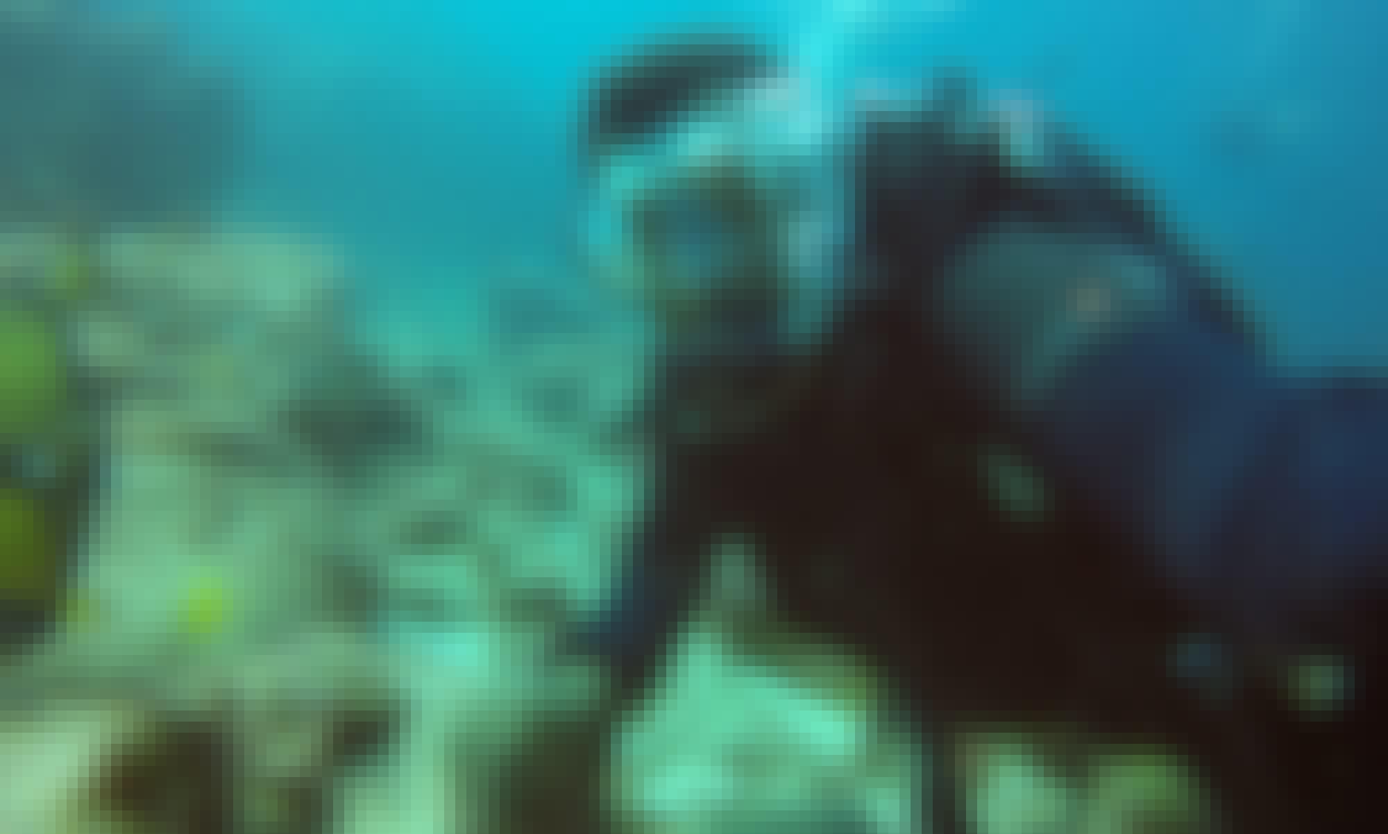 Scuba Diving Trip and PADI Courses in Rivière du Rempart
