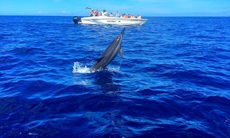Swimming with Dolphins  -  Private Boat Trip in Flic en Flac, Rivière Noire