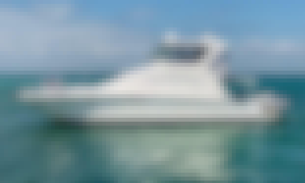 48' Sea Ray Sedan Bridge Motor Yacht Rental in Miami, Florida