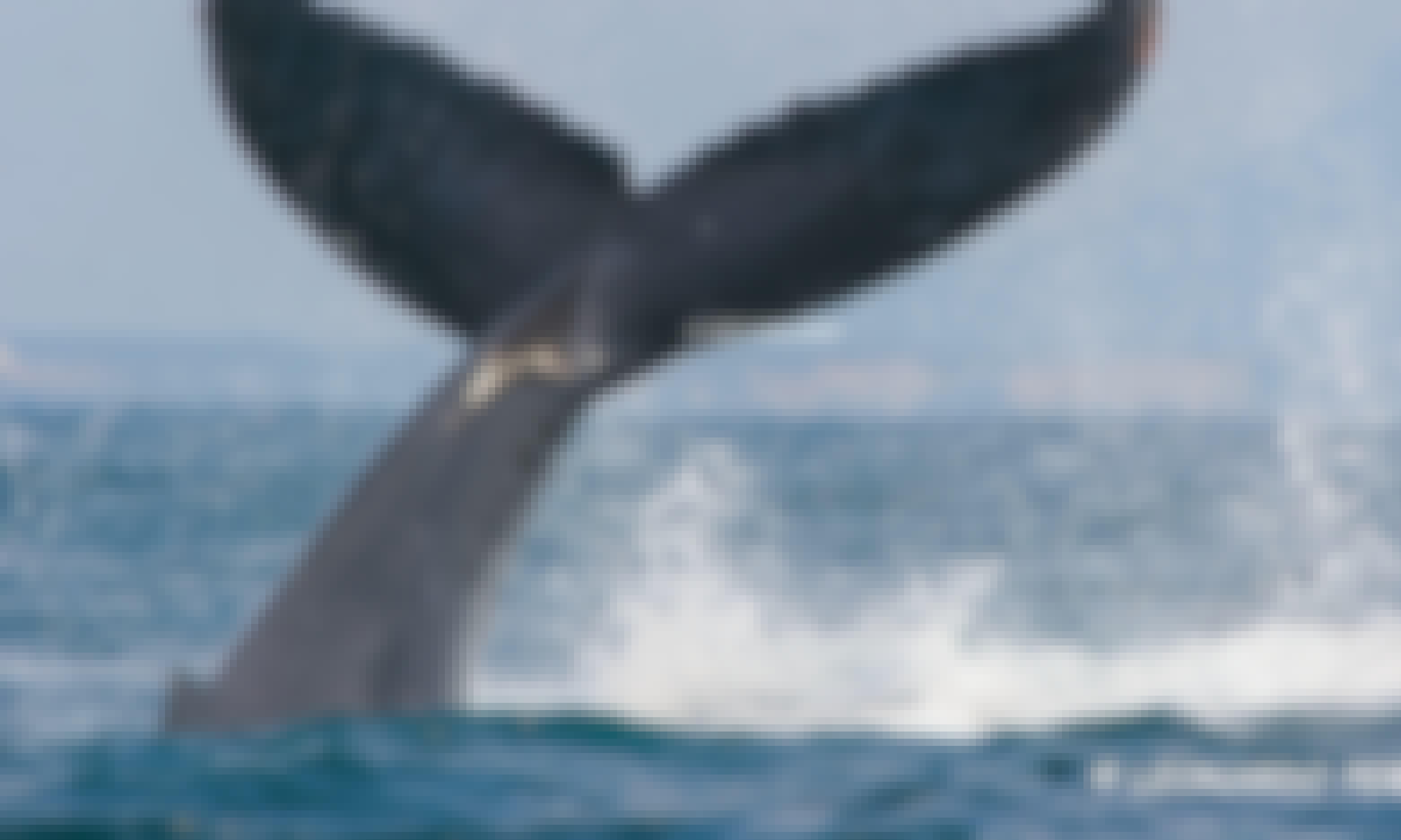 Whale Watching Tour in Puerto Vallarta