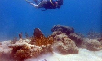 Guided Shore Dive with SNUBA in St. John, USVI