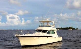 Tarpon and Shark - Private Fishing Charter for 6 People in Islamorada, Florida!