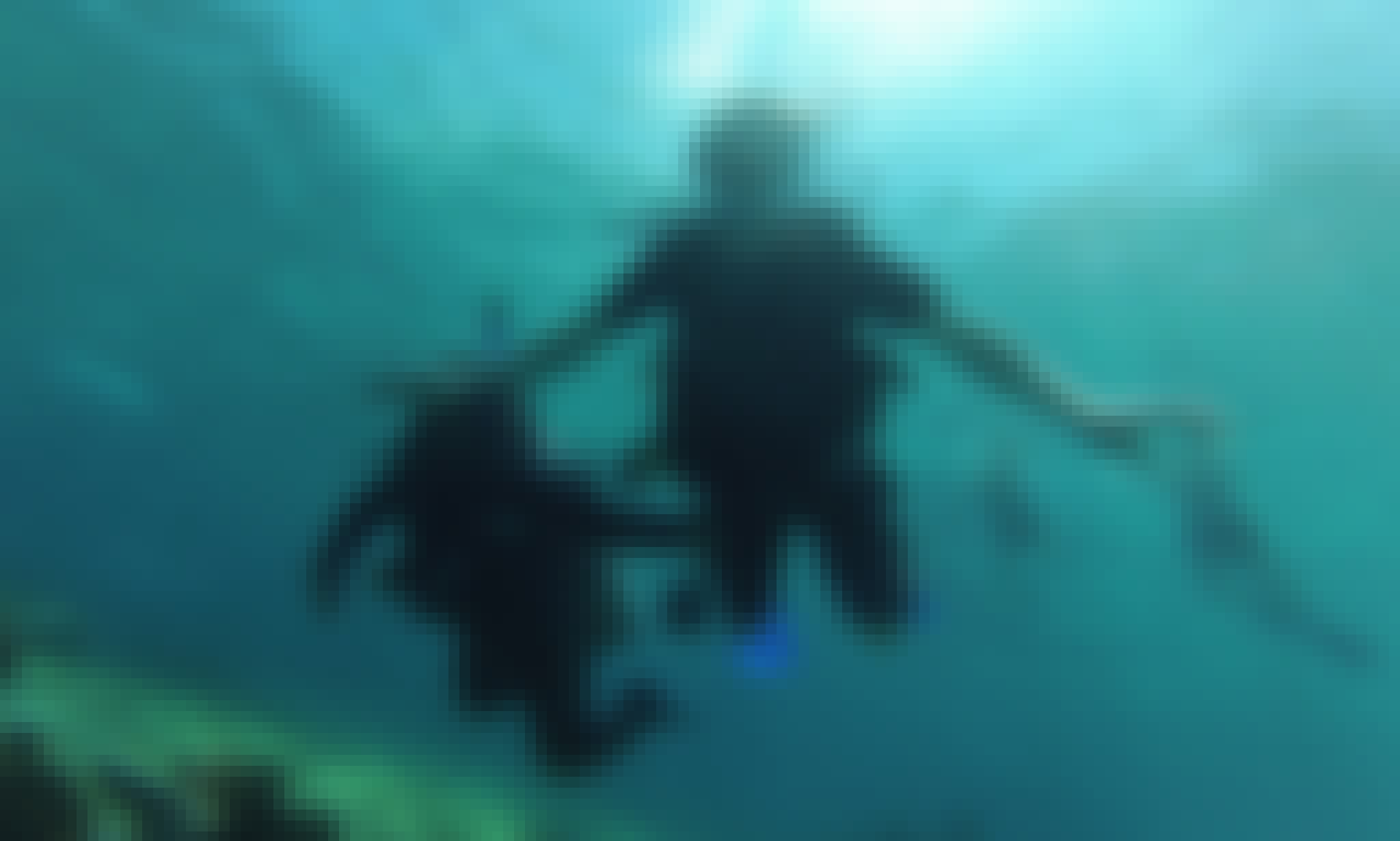 Scuba Diving Trips for Beginners and Certified Divers in San Miguel de Cozumel, Quintana Roo