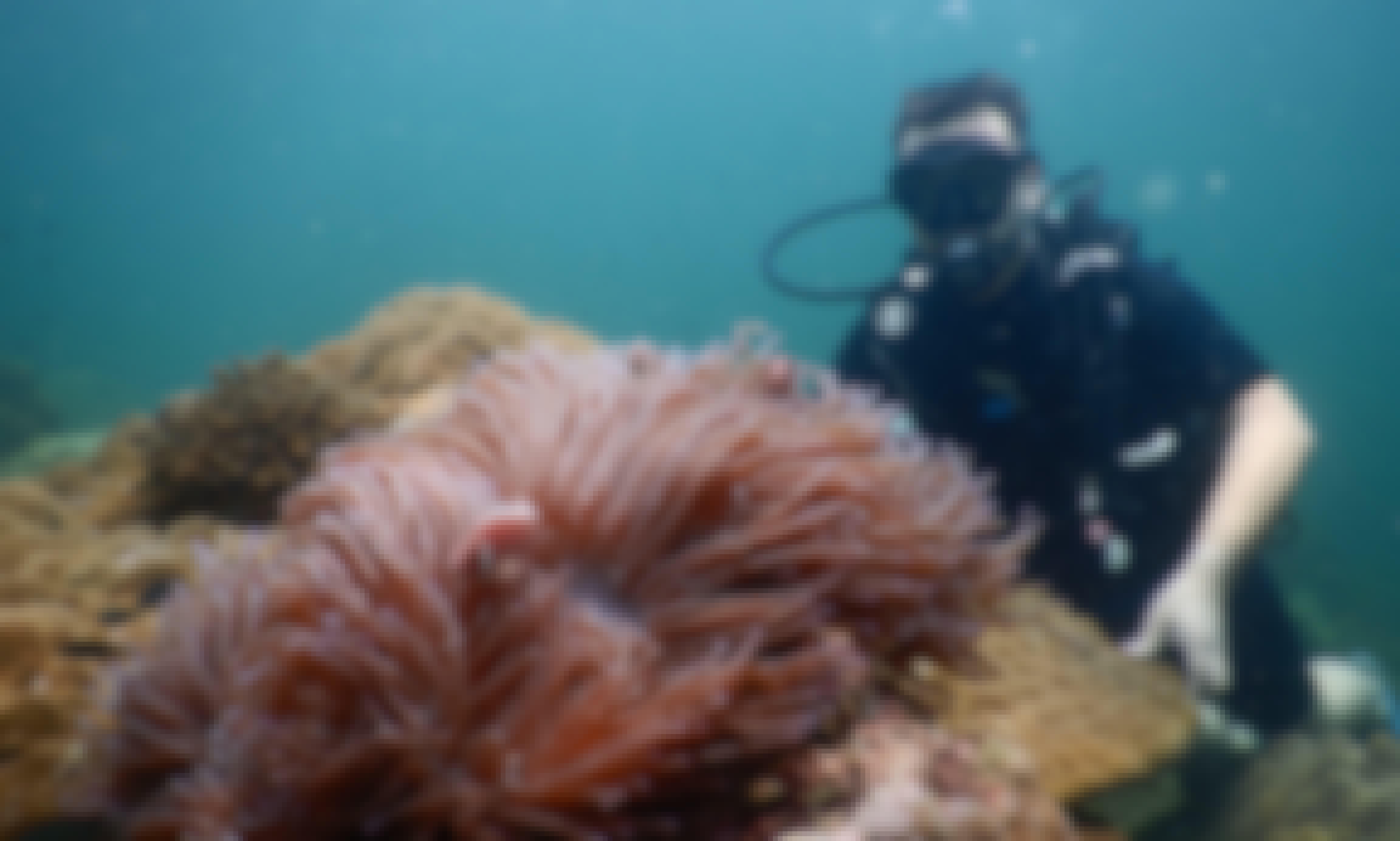 Diving Trip in Thành phố Phú Quốc, Kampot Province