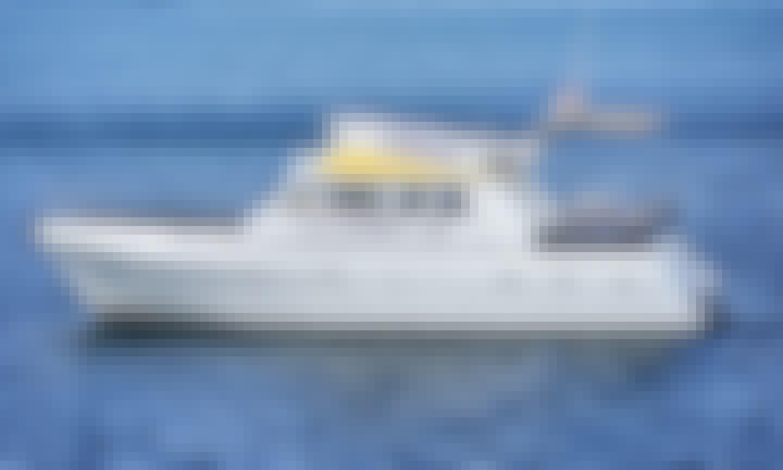 41' My12 Large Flipper Boat Rental in Pula, Istarska Županija
