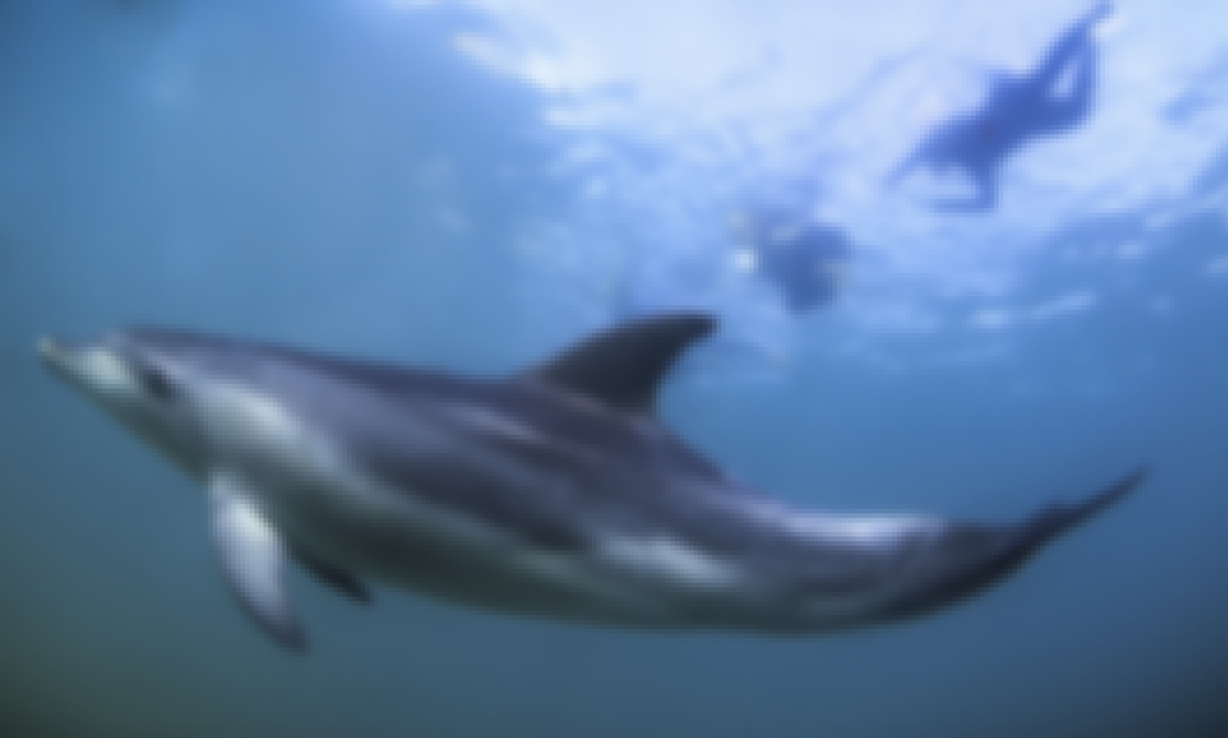 Private Dolphin and Seal Swim Tour for Up to 20 People