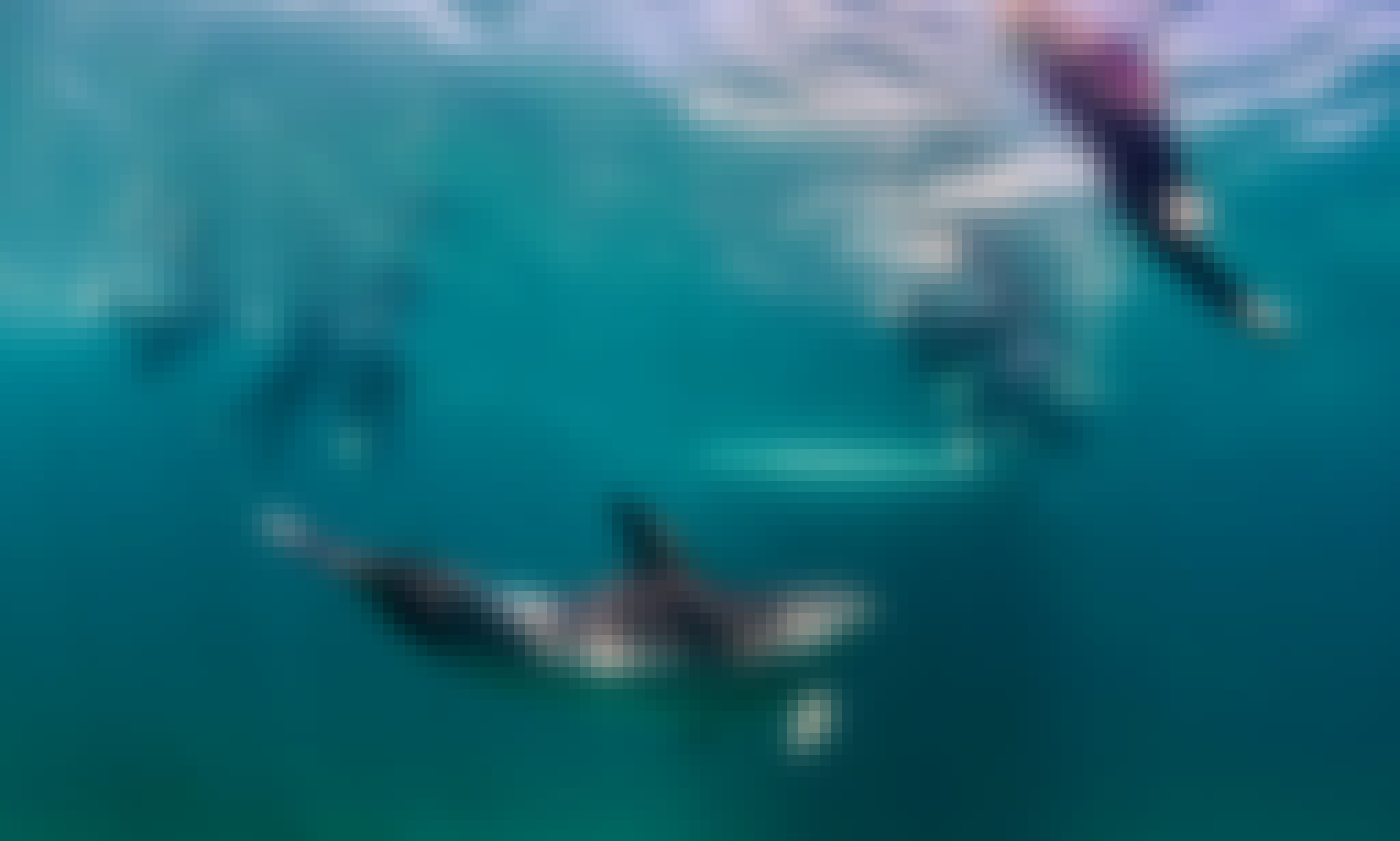 3-Hours Dolphin and Seal Swim Tour On Port Phillip Bay!
