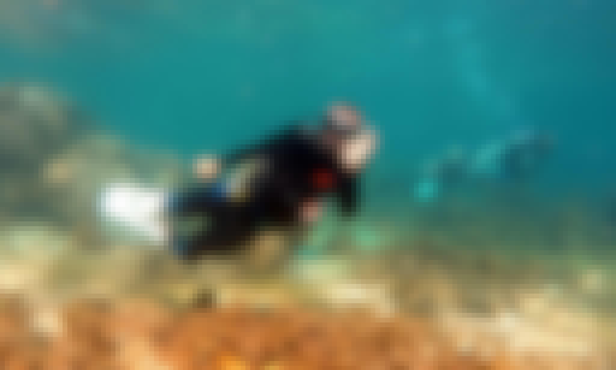Discover Scuba Diving in Lapu-Lapu City, Cebu