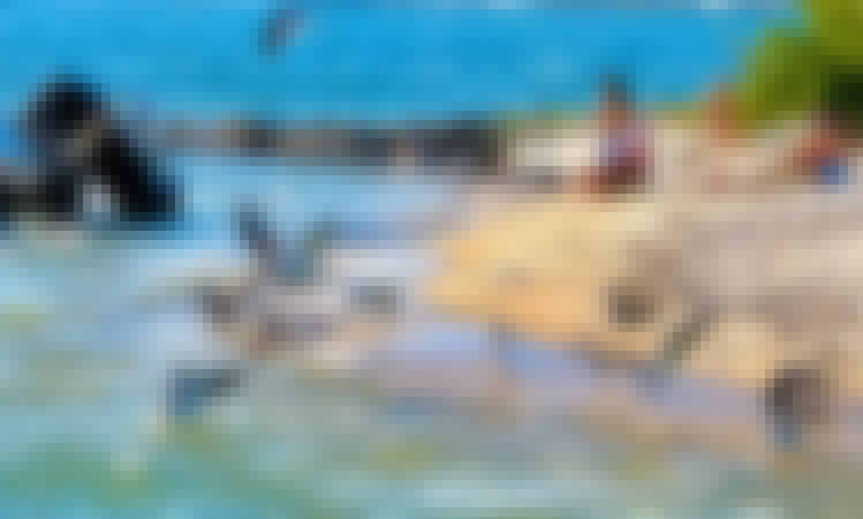 Yacht cruiser 33 party miami