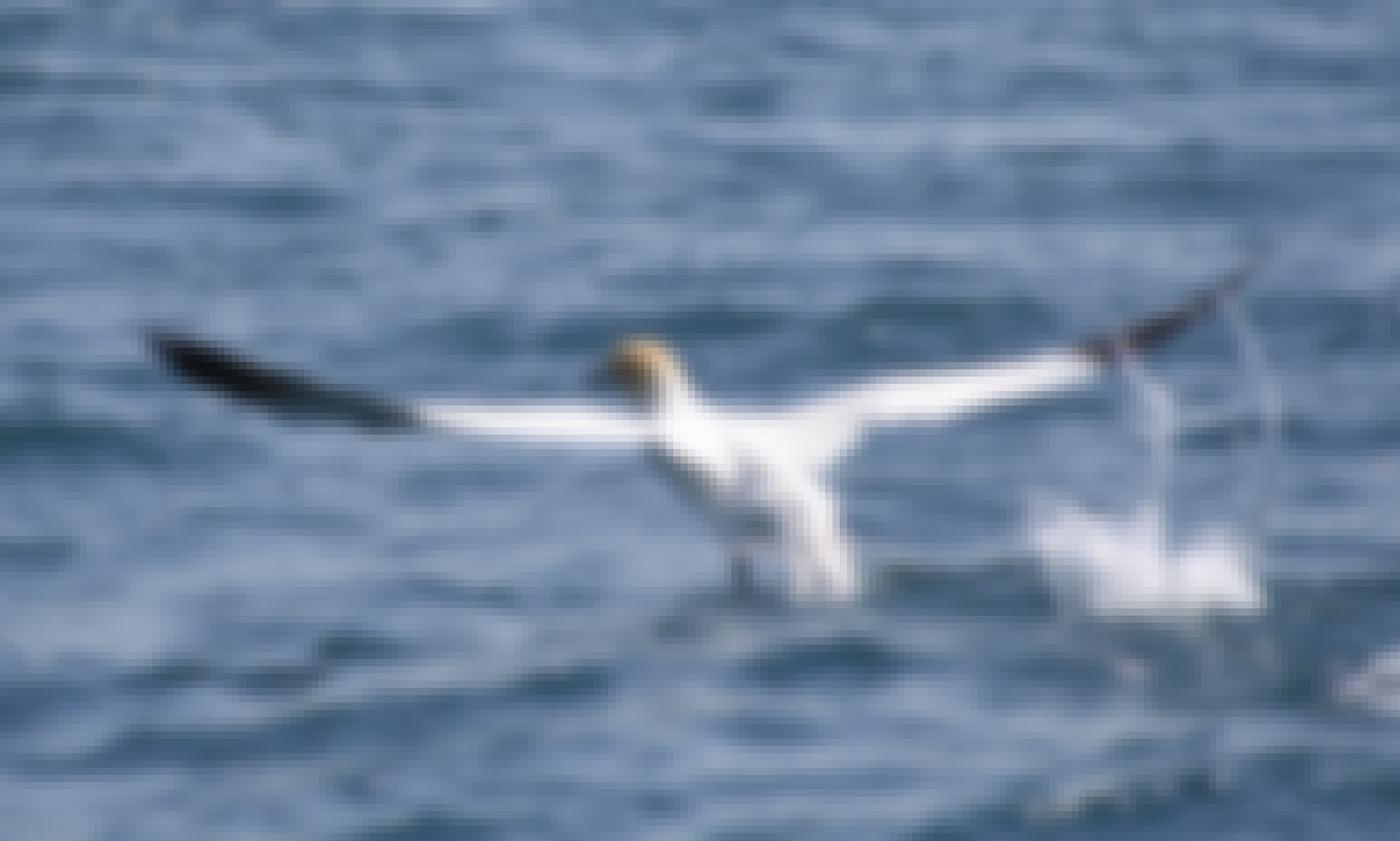 """Wildlife Safari trips in the Isles of Scilly aboard """"Spirit of St Agnes"""""""