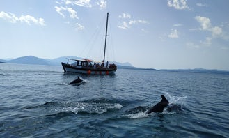 Dolphin Cruises in the Gulf of Amvrakikos from Preveza