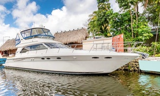Miami Cruise On A Beautiful 50' Sea Ray Sedan Bridge Motor Yacht