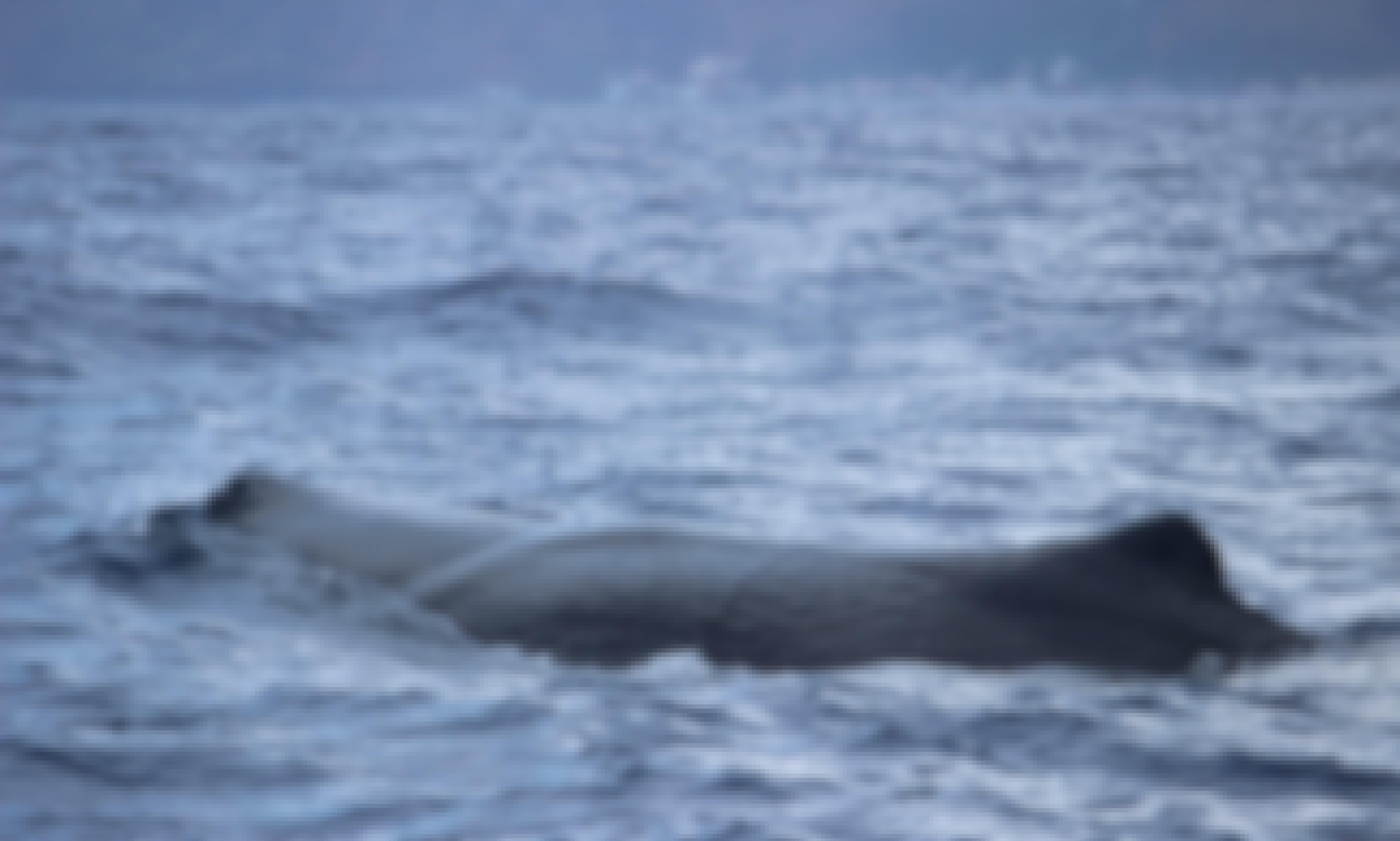 Experience RIB Whale Watching Trip in Calheta