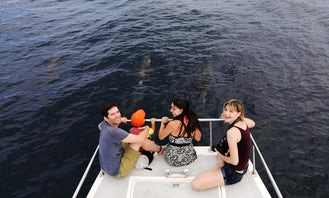 Dolphin Sightseeing and Snorkeling Catamaran