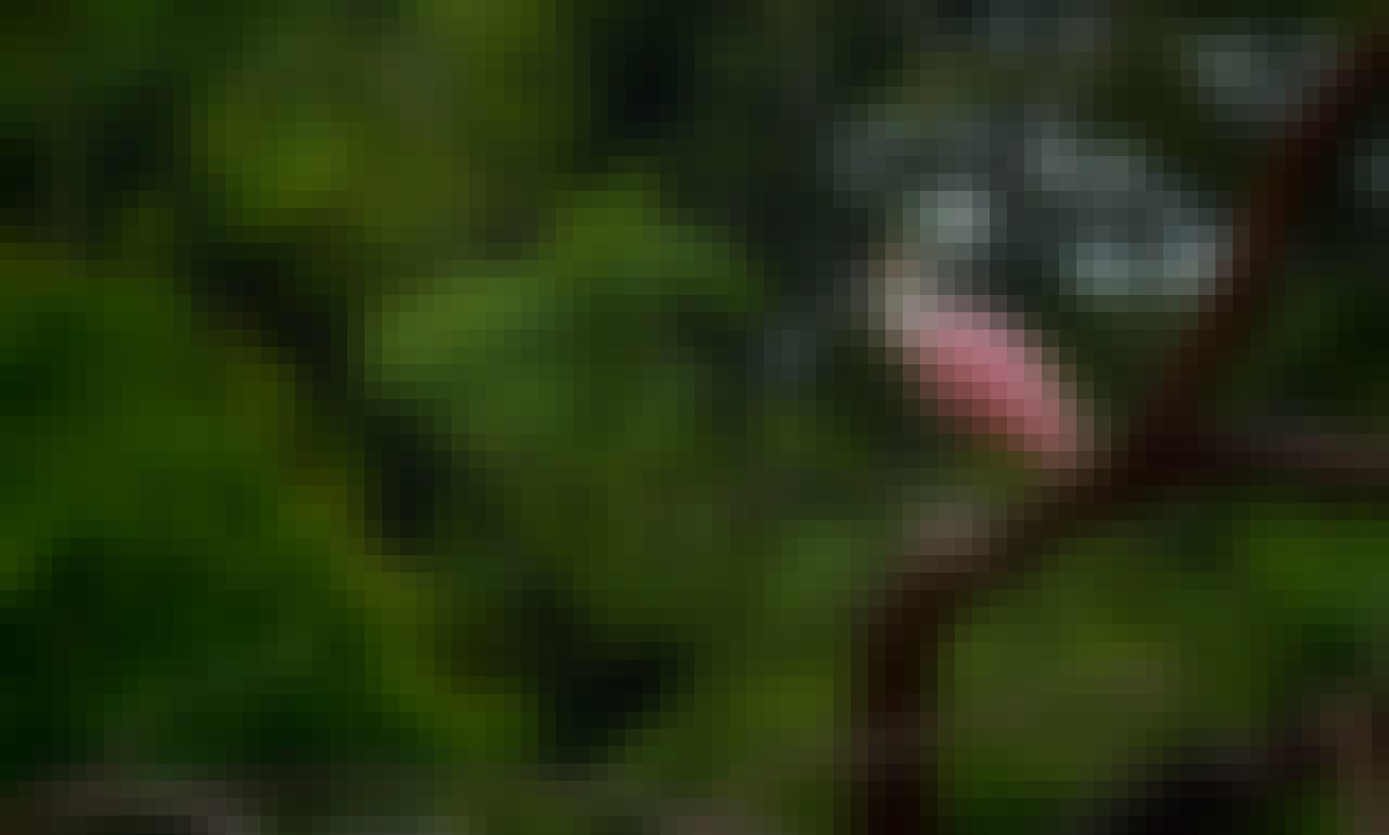 Wildlife & Mangrove Stand Up Paddle