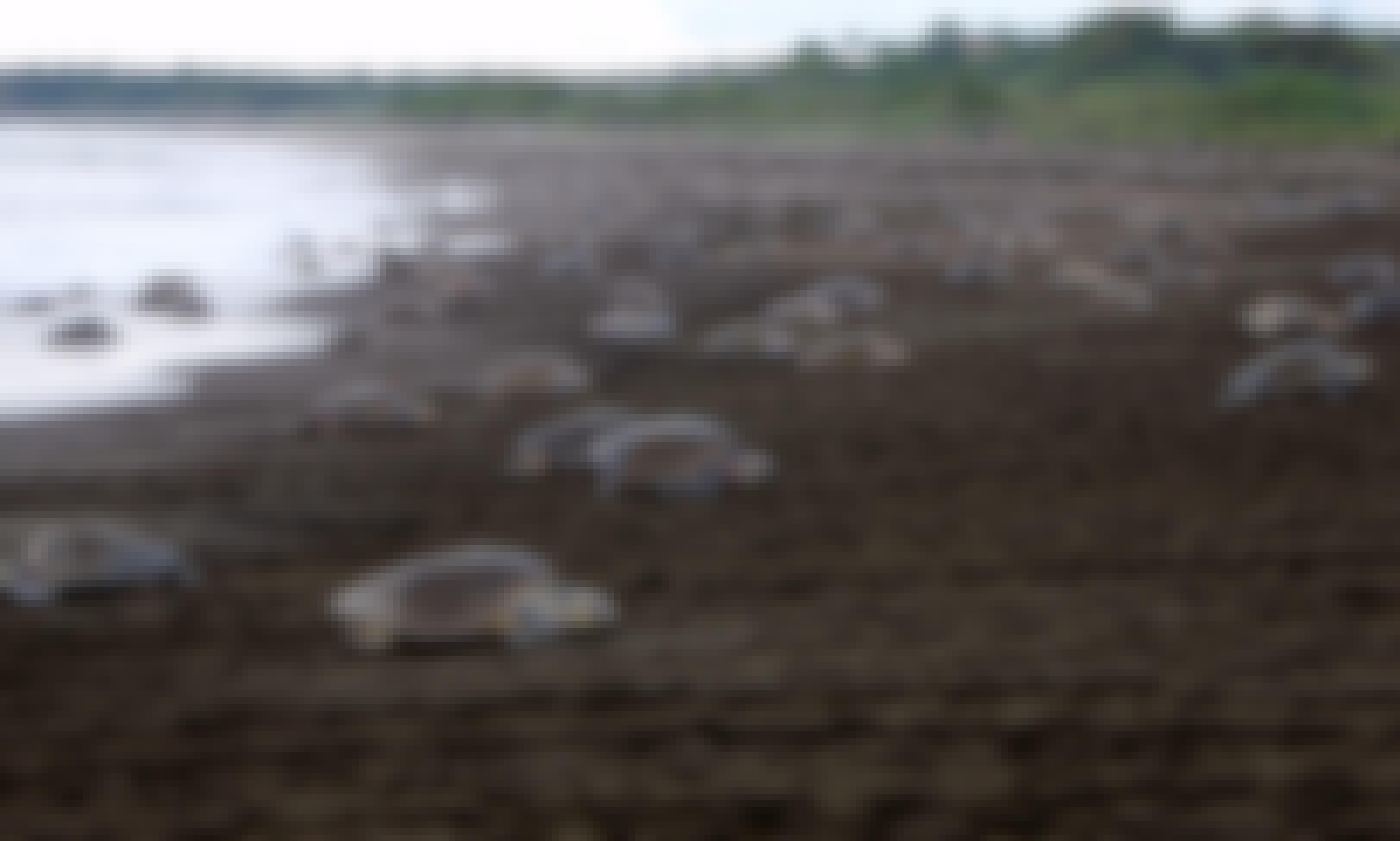 Turtle Nesting Night Tour - Samara Beach