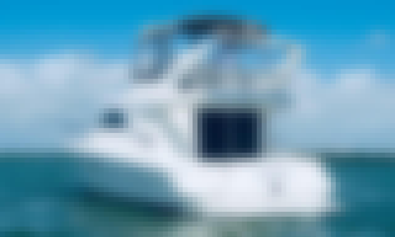 """SeaRay 46"""" Private Yachts / Round trip transportation included Hotel-Marina-Hotel"""
