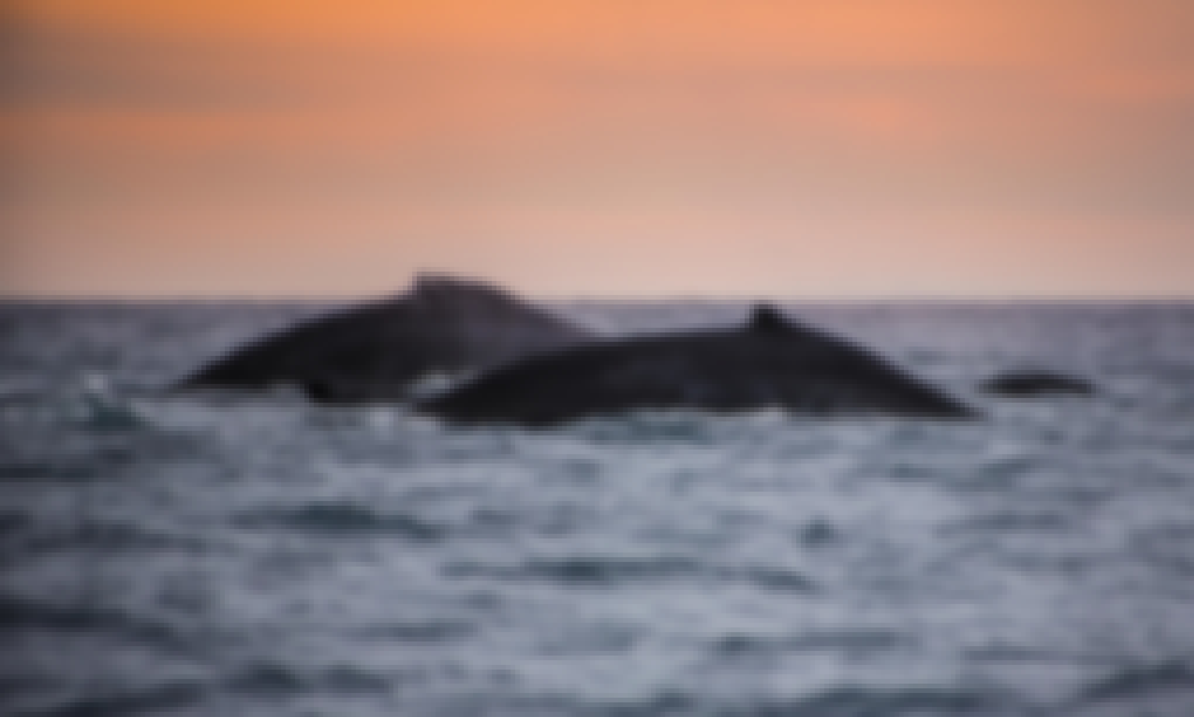 Sunset Whale Cruise Cabo San Lucas