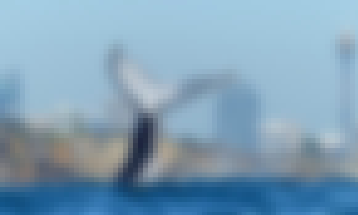 Luxury Whale Watching in Pyrmont, New South Wales