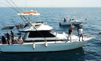 Motor Yacht Charter in Puerto Peñasco, Mexico