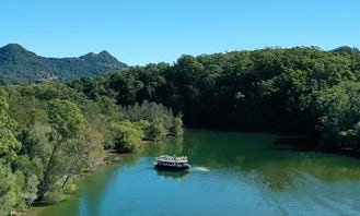 Morning Eco Rainforest River Cruise (1 Hour) in Brunswick Heads