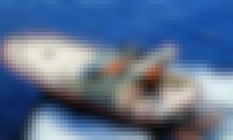 Amazing 36 Semicabinato Gozzo Boat Ready to Rent in Piano di Sorrento, Campania