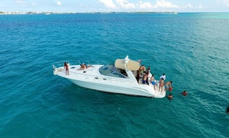 Sporty and Luxurious Sea Ray Sundancer 45' Motor Yacht in Miami, Florida