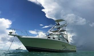 Motor Yacht rental in Key Largo (No fishing day)
