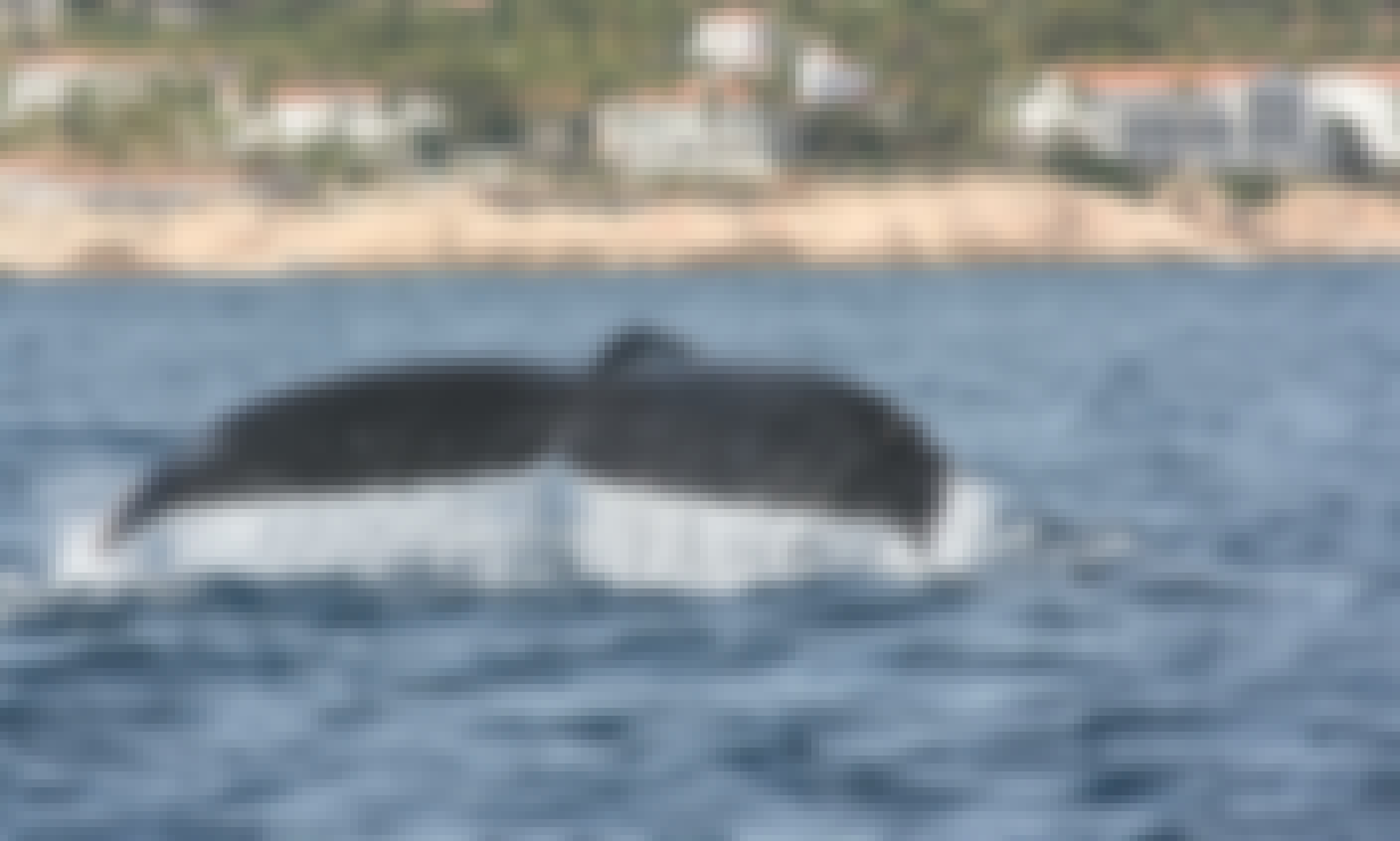 Private Whale Watching in San José del Cabo