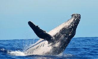 Wale wantching in Puerto Vallarta