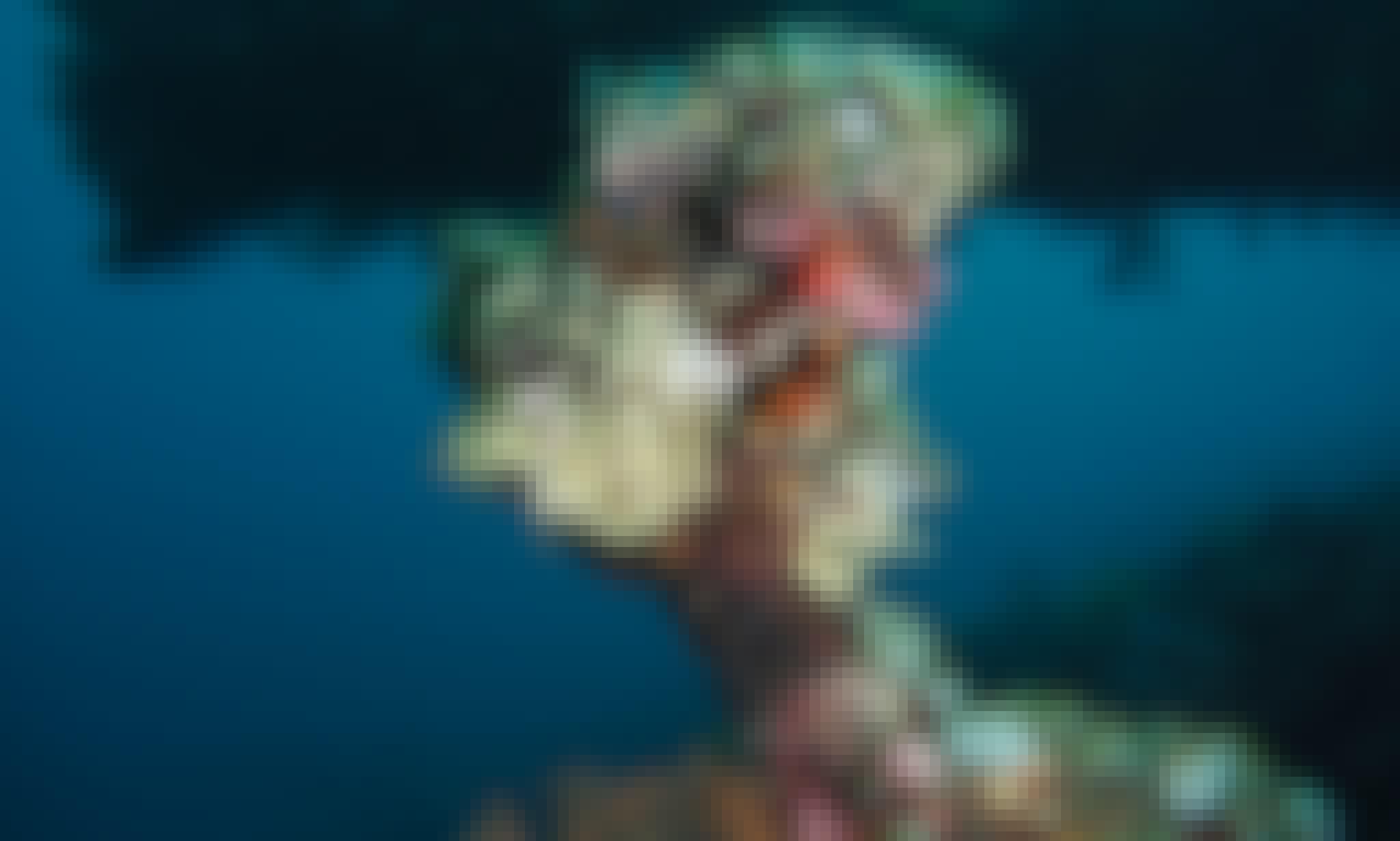 PADI Scuba Diver Course (SD)