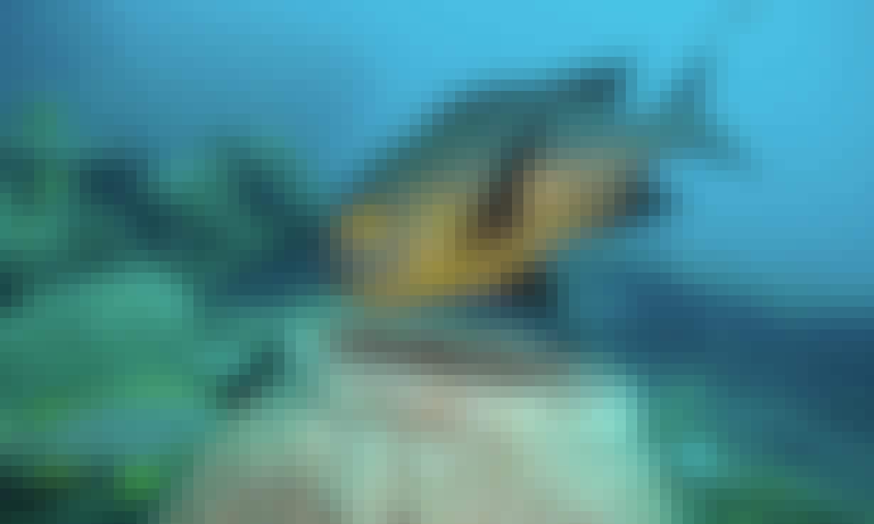 PADI Advance Open Water Diver Course (AOWD) - junior / senior