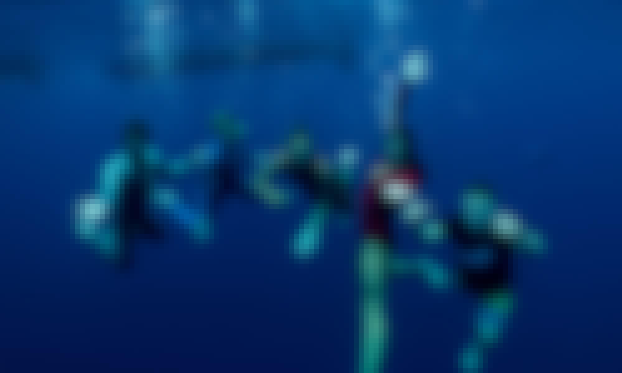 Certification Freediving in Tulum, Quintana Roo.