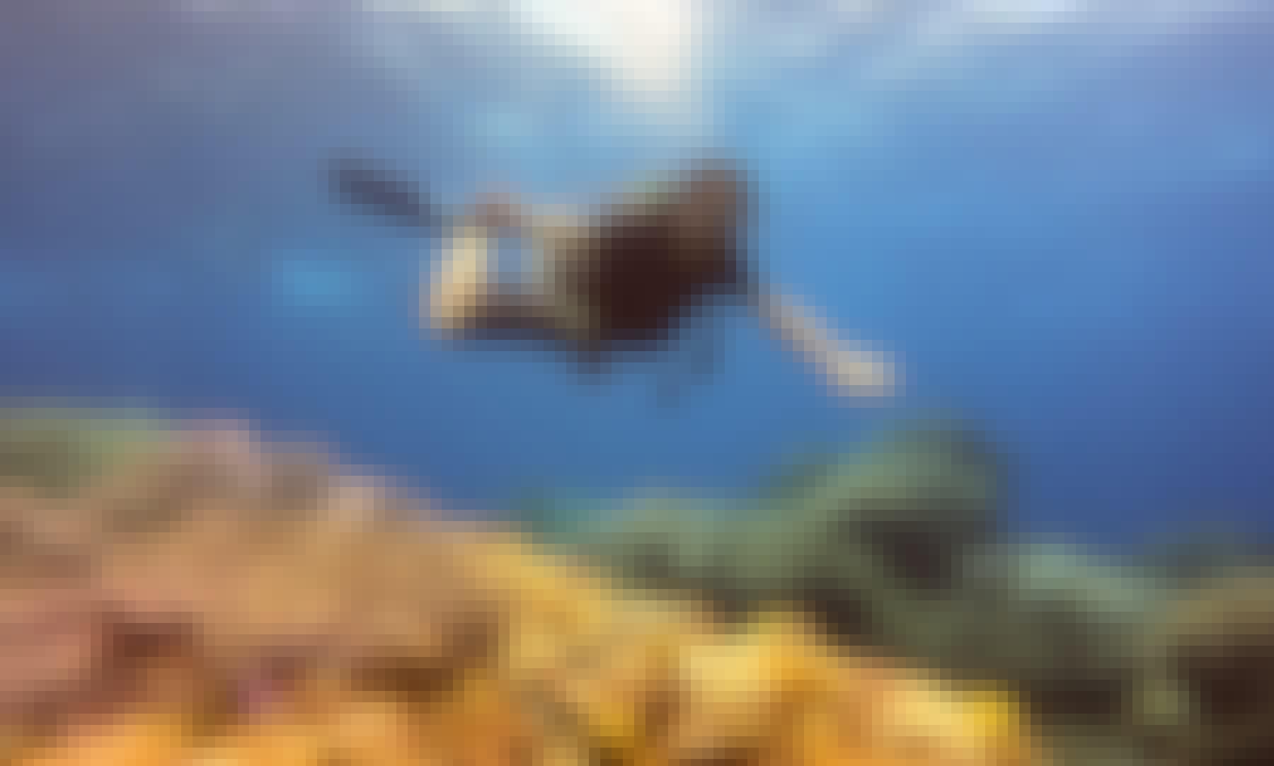 PADI Diving Courses in Cozumel
