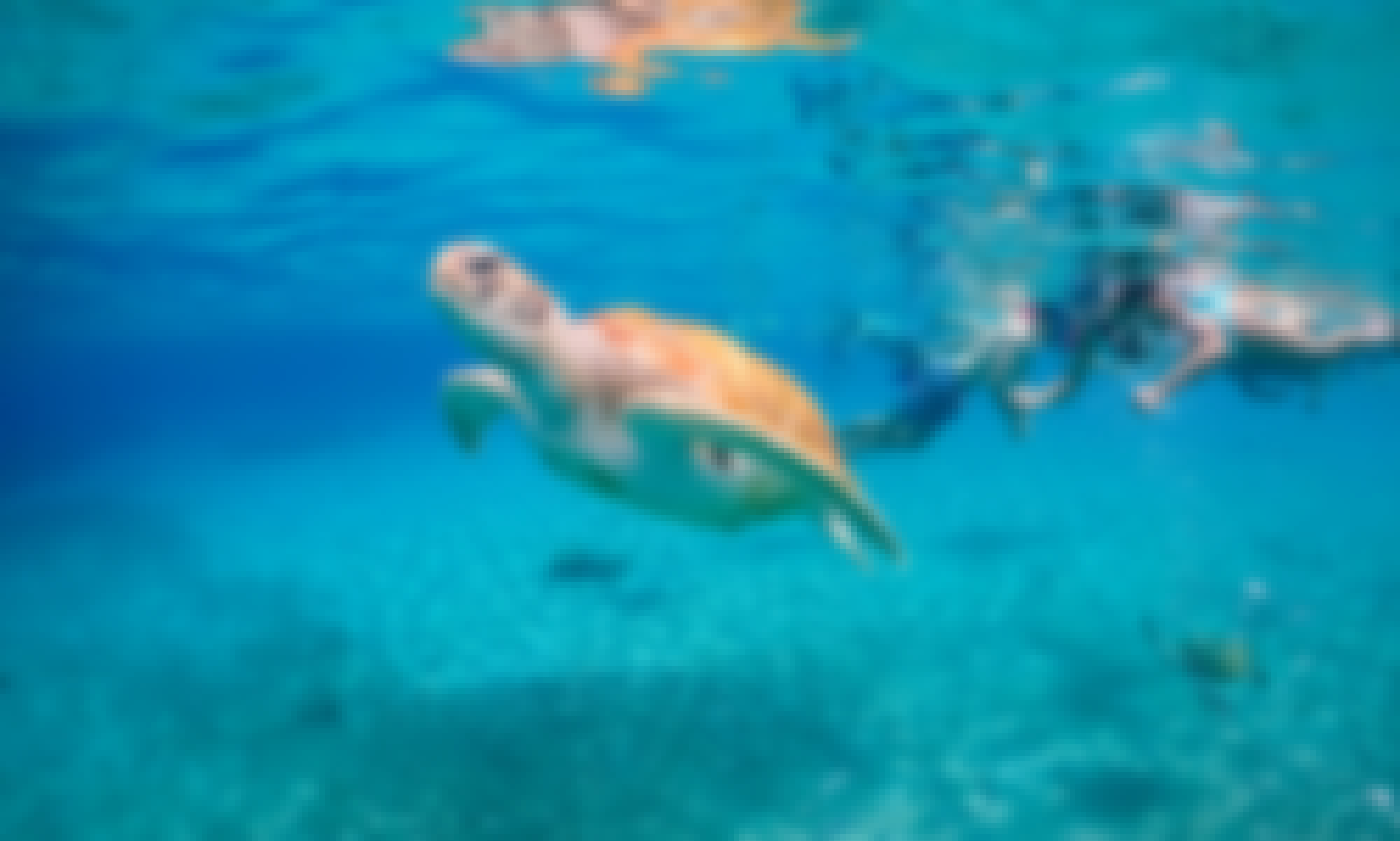 45ft Don Smith Powerboat Tour in Nassau, Bahamas