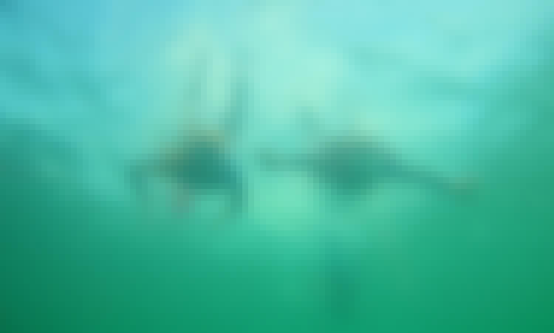 Snorkeling Lesson In Albufeira Sea