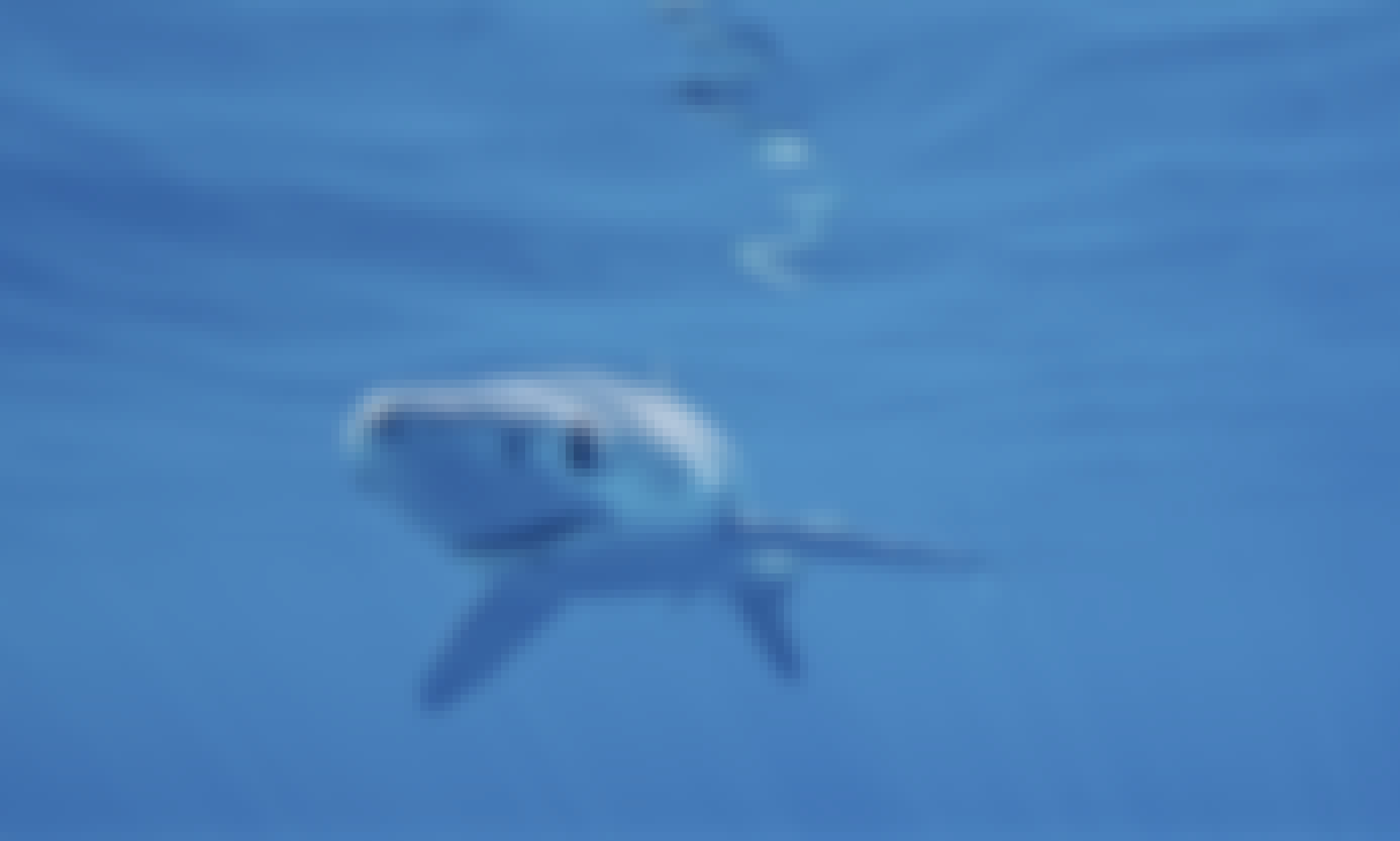 Swim with Blue sharks in San Diego!