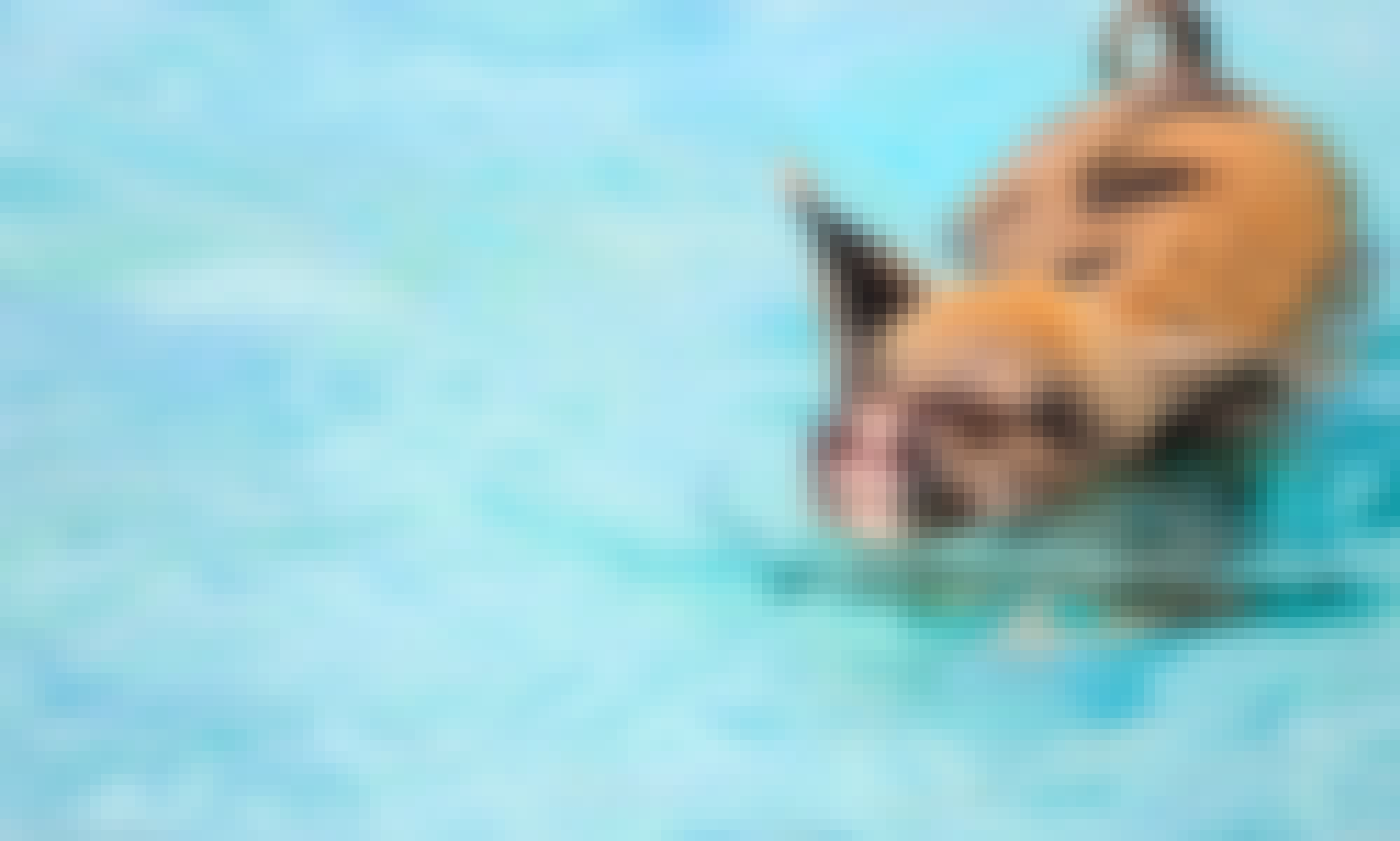 Swim With The Pigs Trip In The Bahamas