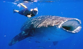 Private Whale Shark Tour in Playa del Carmen, Mexico