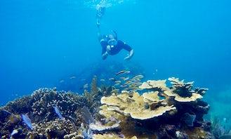 Private Snorkeling Adventure in Playa del Carmen